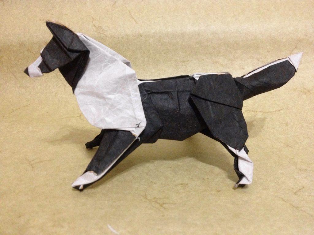 cachorro dobradura