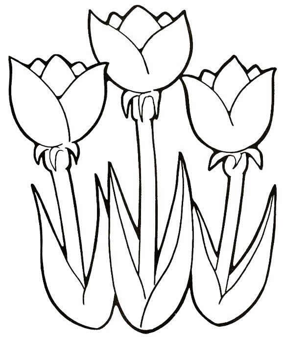 Moldes de flores para colouring pages