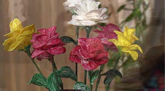 Flor: Beth Pires