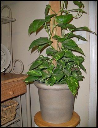 Decorar vaso de planta de plástico é muito fácil (Foto: keeninspirations.blogspot.com.br)