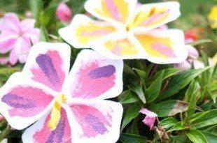 Flores Havaianas de Feltro com Molde - Passo a Passo