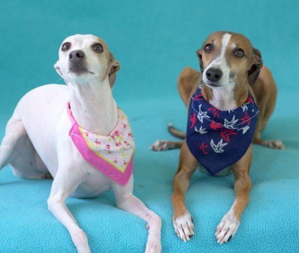 Esta bandana para cachorro é fofa, linda e muito fácil de ser feita (Foto: mysocalledcraftylife.com)