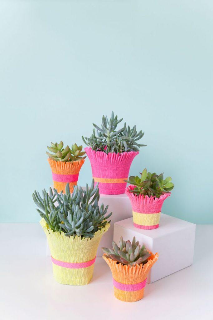 Vasinhos de Planta