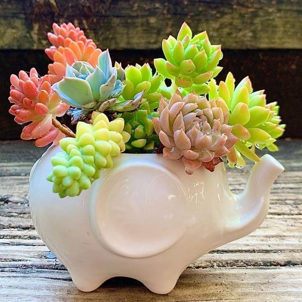 vaso de planta de elefante