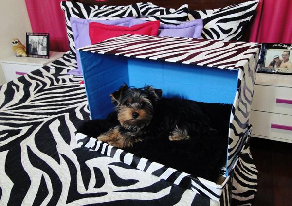 casinha de cachorro estampada