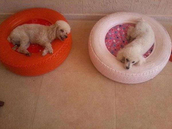 casinha de cachorro de pneu colorido