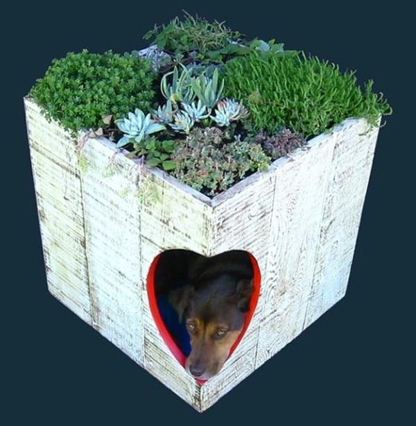 casinha de cão com portinha de coração