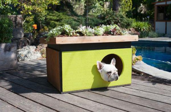 casa de cachorro pintada