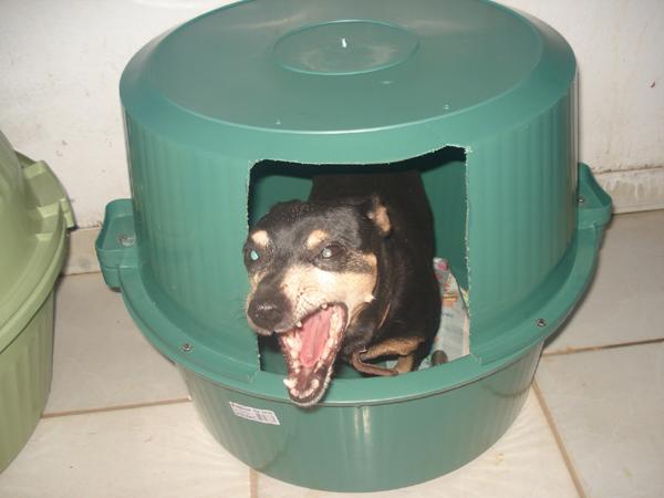 casa de cachorro barata