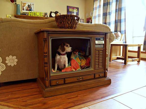 casa de cachorro de televisão