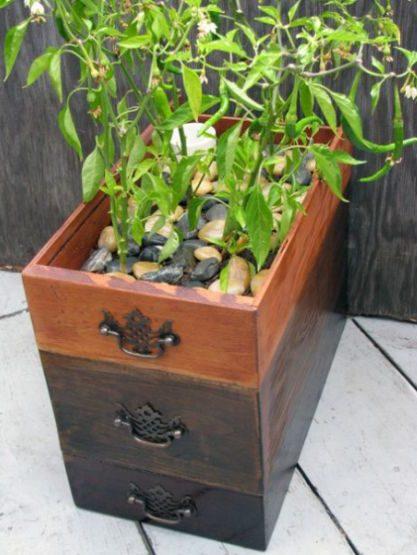 gaveta antiga como vaso de planta