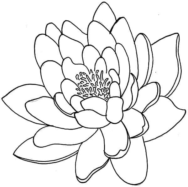 flor desenho