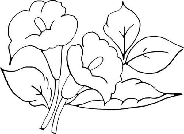 desenhos de flor lirios