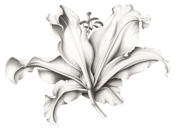 desenhos de flor orquideas