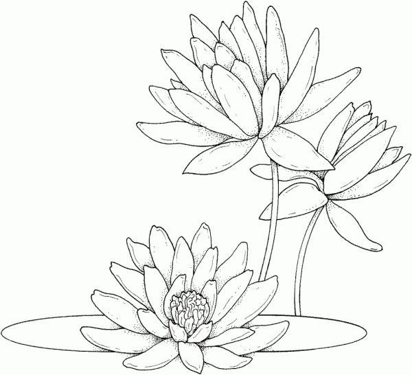 desenhos de flor simples