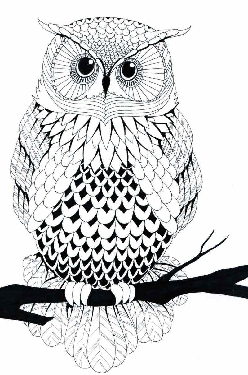 desenho de coruja lindo