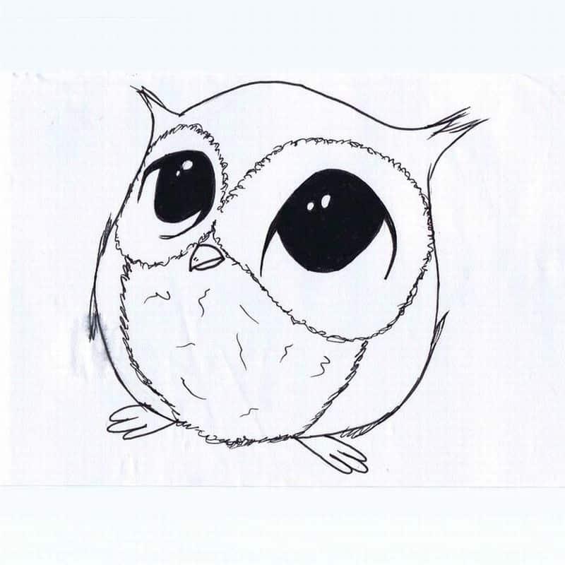 desenho de coruja bebe