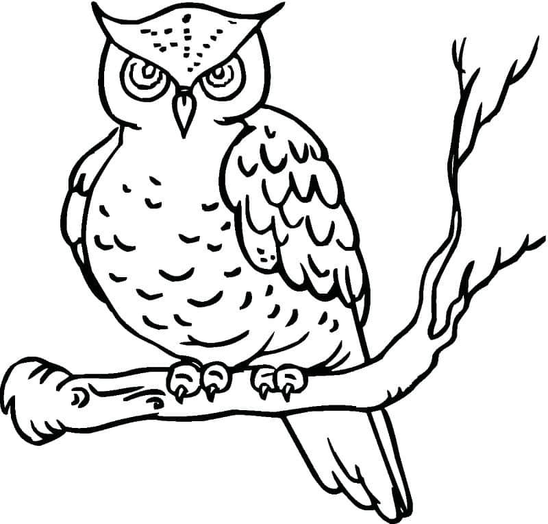 desenho de coruja brava
