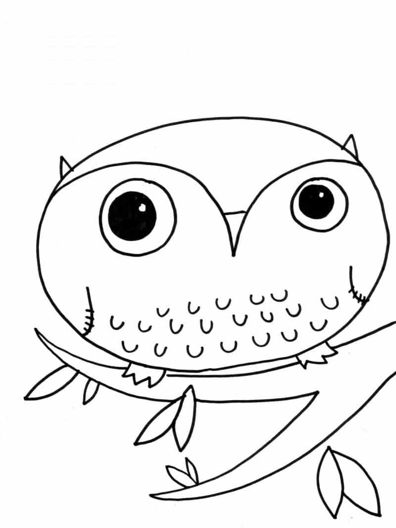 desenho de coruja oval