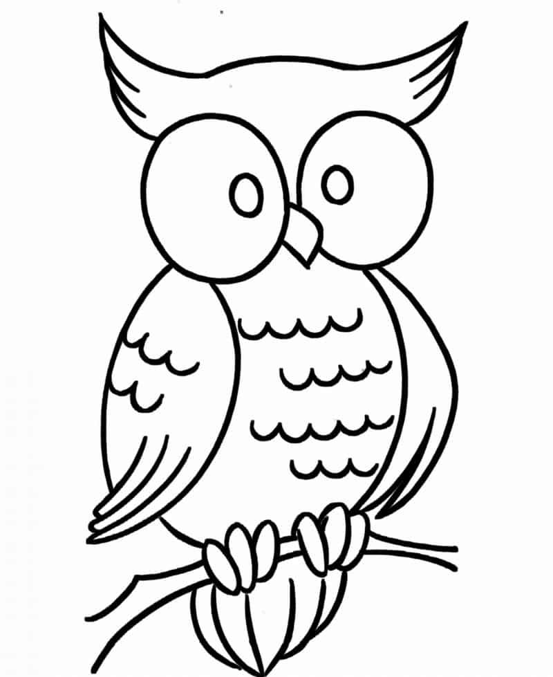 desenho de coruja simpatica