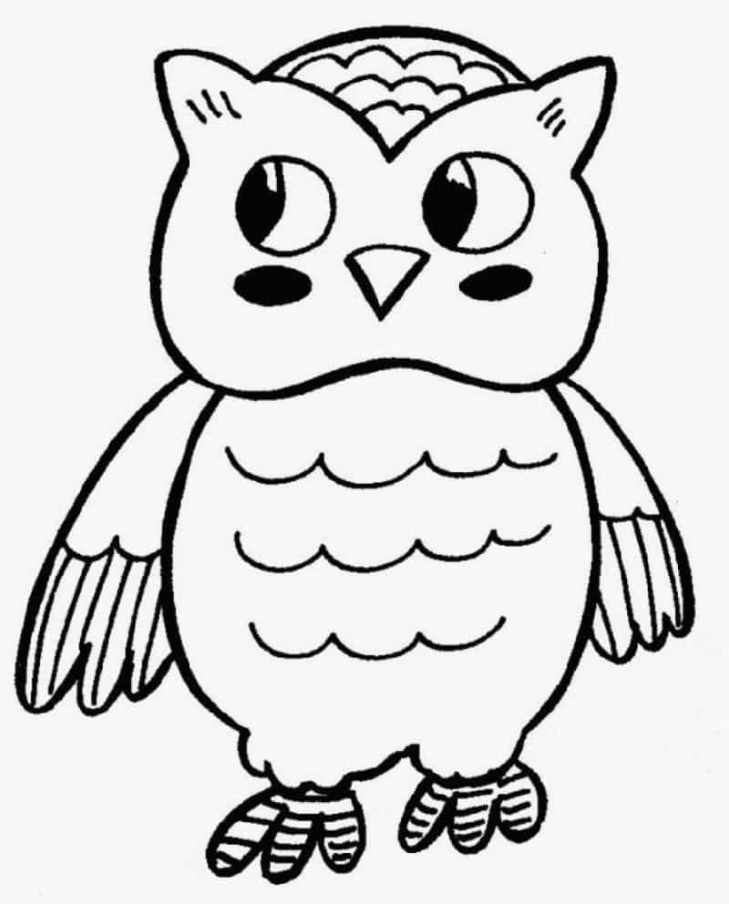 desenho de coruja bonito