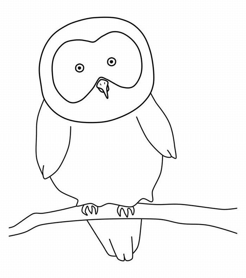 molde desenho de coruja