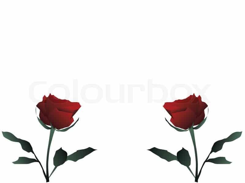 rosa dupla