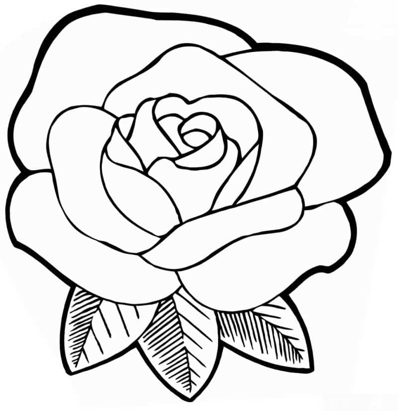 desenho de rosas para colorir 20 imagens para imprimir artesanato