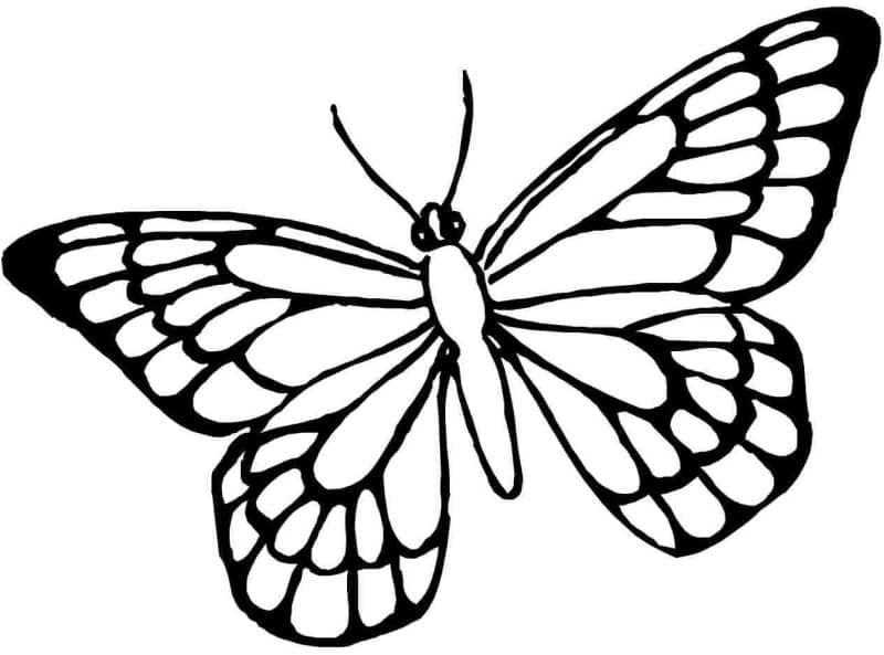 borboleta linda