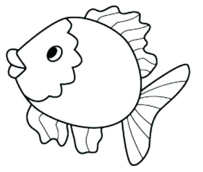 peixinho fofo