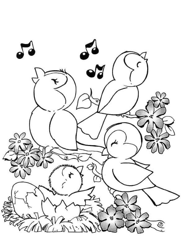 Pássaros felizes