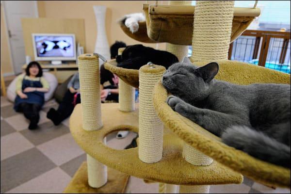 Caminha e casinha para gatos