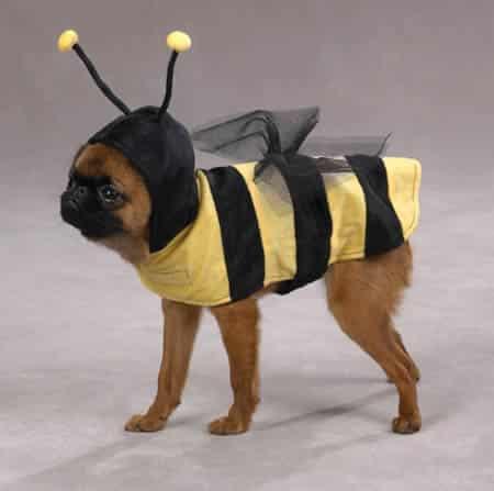 Cachorro com fantasia de abelha