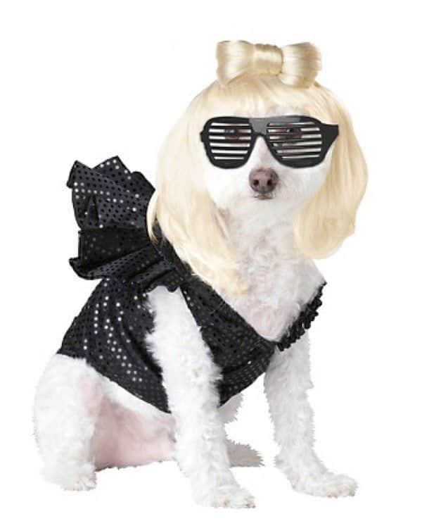 Cachorro com fantasia de Lady Gaga