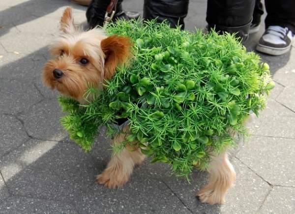 Cachorro fantasiado de arbusto