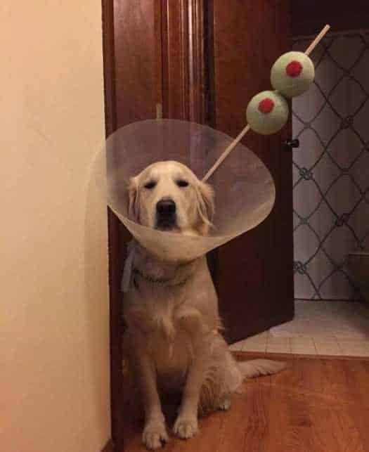 Cachorro vestido de drink