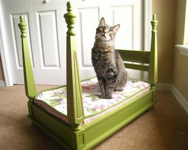 cama-chique-gatos