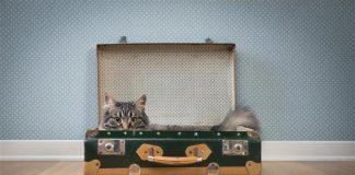 casa para gato_mala