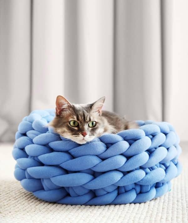 gato-cama-azul