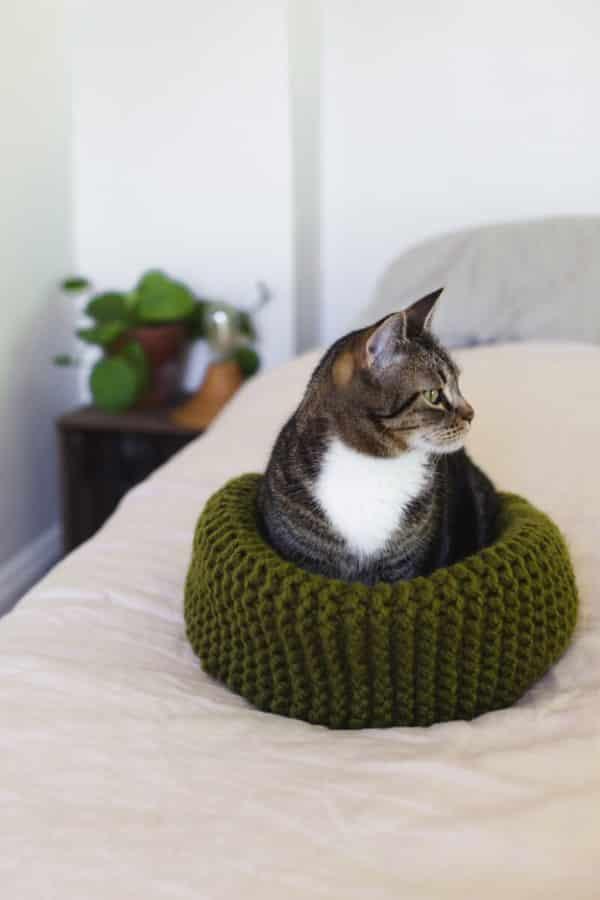 cestinho_de_lã_para gato