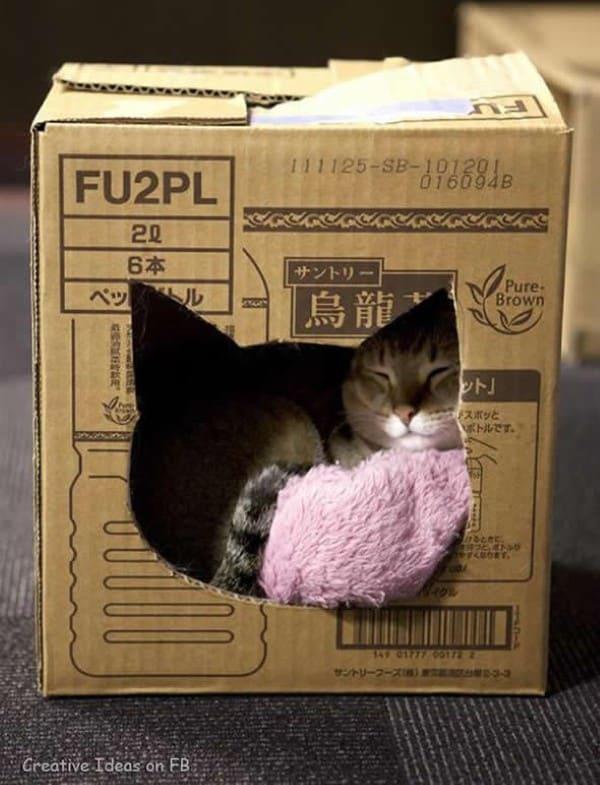 gato dentro de casa de papelão