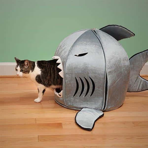 casa de tubarão para gato
