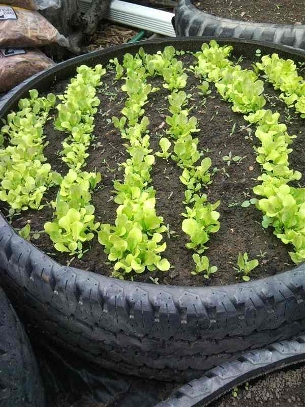 horta com pneu