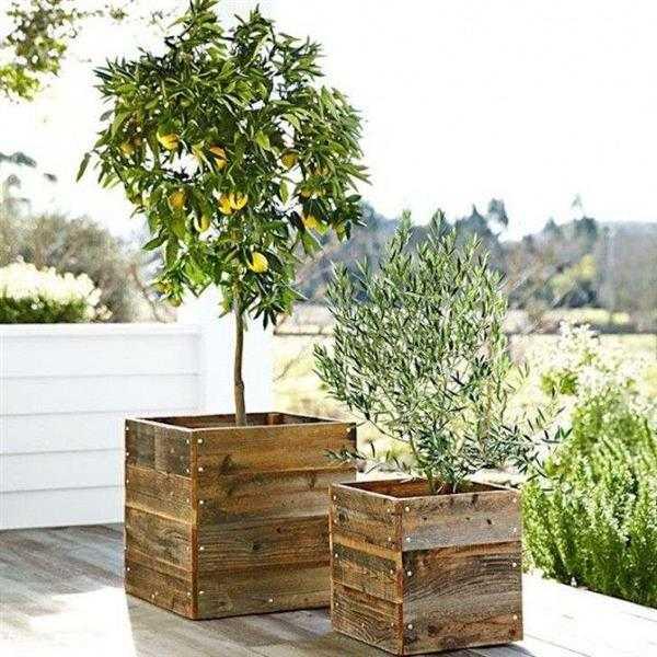 madeiras para decoração de jardim