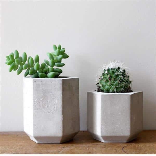vaso de cimento com mini plantas
