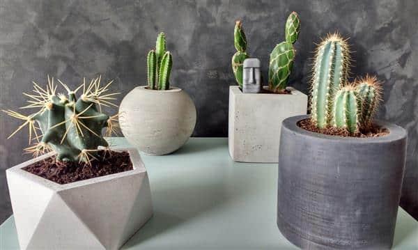 vaso de cimento para cactos