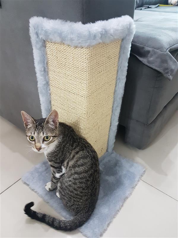 arranhador-gato-canto-de-sofa-gato