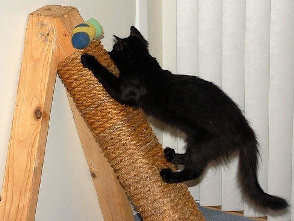 como-fazer-arranhador-para-gatos-caseiro