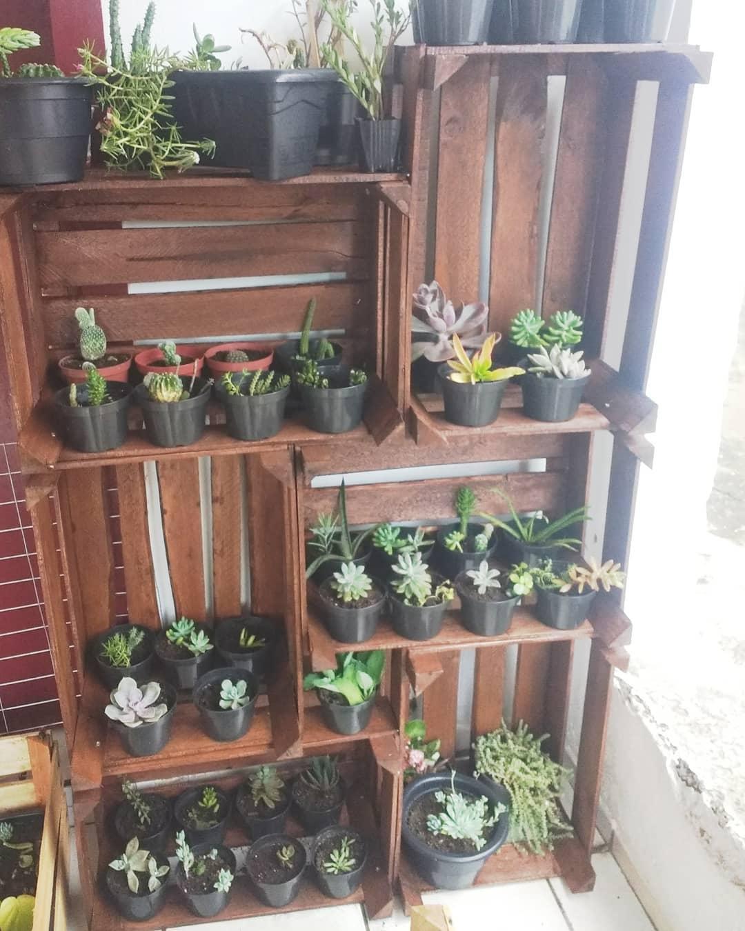 caixotes para colocar plantas