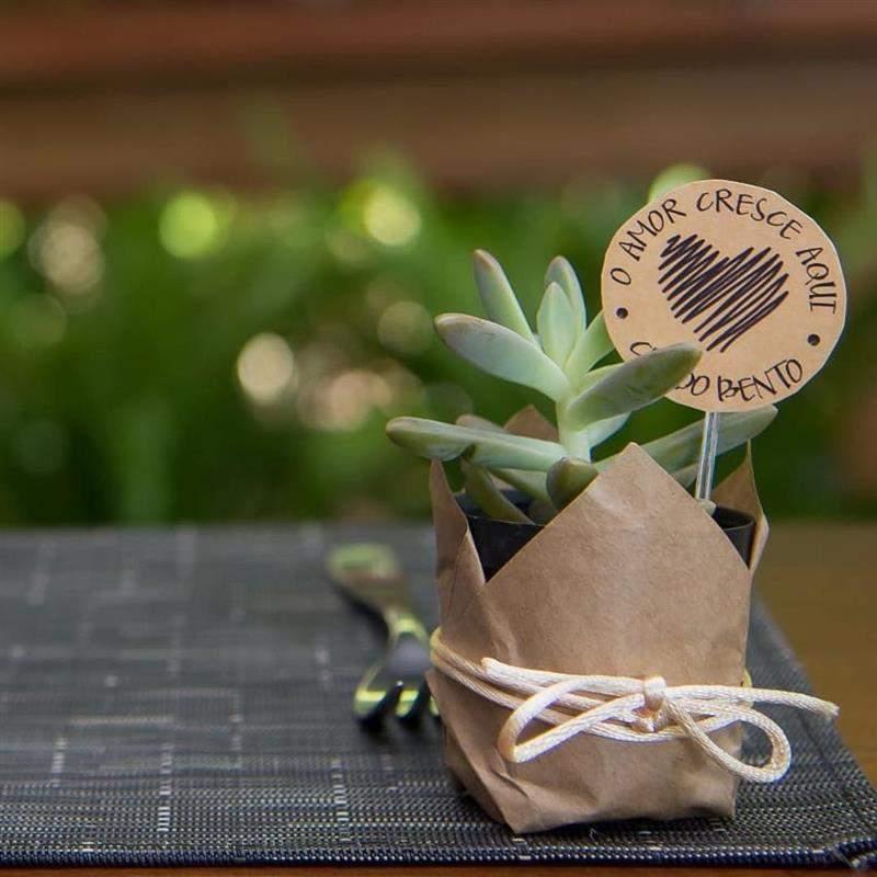 suculentas são plantinhas adoráveis para dar como lembrancinha